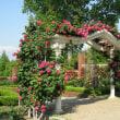 薔薇 蜻蛉池公園