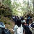 青木ヶ原樹海の散策、溶岩流の観察の実習
