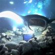 3日目3本目「ハワイ島・Gerden Eel Cave」での57分