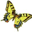 礼拝④「心を一新する礼拝」ローマ11章33節-12章2節