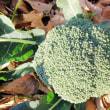 12月14日・ブロッコリー初収穫しました!