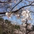 桜の季節ですね