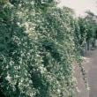 『秋ふかし』 白萩