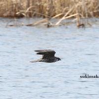 水面を飛ぶ 6