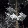 山梨県 大雪予報!速報 清里高原 大雪  深夜になって降雪なし