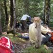 ピレネー山小屋縦走トレッキング;第7日目(2);エステレッチョの滝からオルデサ渓谷登山口へ