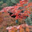 昼間はポカポカ 11月17日(土)晴れのち曇り
