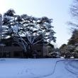 茨大本館前の松の木に雪