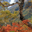 秋の写真です。