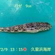 笑転爺の釣行記 2月9日☀ 久里浜海岸