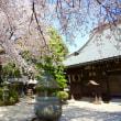秦野桜散歩4はだの桜みち・浄円寺の桜