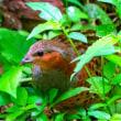 14/Jun 朝焼けと季節の花と鳥と