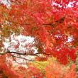 彩り木の葉。