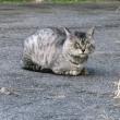 落ち葉を眺め歩いていたら、すっげぇ〜ドヤ顔の猫に出会っちゃいました!