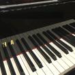 うさぎを飼うピアニストの謎。