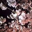 【佐賀県唐津市】鏡神社 鏡夜桜~夜桜のライトアップ~