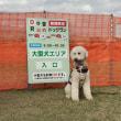 ●相川ドッグラン