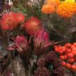 秋の 実物や お花
