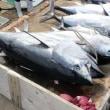 クロマグロ WCPFC北小委員会 水産庁が小型魚、大型魚とも15%引き上げ提案