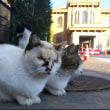 県庁に集まる猫にTNR、山梨の民間団体