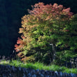 気になる木(3)