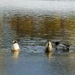 菖蒲池 中島公園
