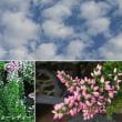 カルーナ・ビューティーレディーの花は