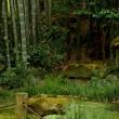 鎌倉散策 報国寺