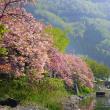 奥琵琶湖、ゆったりと流れる季節