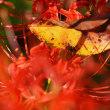 続・Autumn Leaves