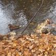 11月8日(水)秋の自然散歩~精進川沿いを歩こう!の様子