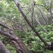 北海道低山紀行 75 雌阿寒岳(オンネトーコース)