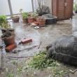 豪雨でも食べるチビアルダゾウガメ