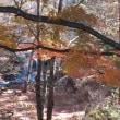 紅葉 鏡山の滝