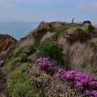 初めての阿蘇、烏帽子岳のミヤマキリシマp4(ミヤマキリシマの中を山頂へ)
