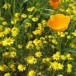 california goldfields