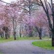 春のお散歩に出掛けます