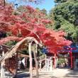 今日も賀茂神社へ