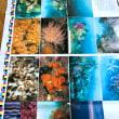 写真集「相模湾の四季 逗子さんごものがたり」の色校正