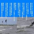 海辺の疾走
