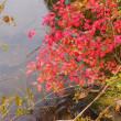 紅葉を見にい紅葉2017