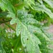 団塊オヤジの日記・・( ~ 今日は朝から雨が降っています・・ ~ )