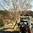今年最後の『ゴルフ倶楽部成田ハイツリー』でした。