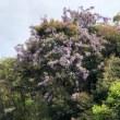 🚶♀️…莵道公園…黄檗公園…獅子林院…   180422