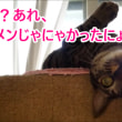 何食べてんの~~!!?