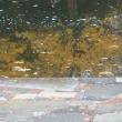 水にうつる紅葉
