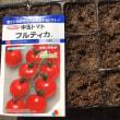 トマト&バジルを播種したYO(^。^)y-.。o○
