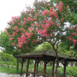 五山の送り火を迎えました。昨日の15日は、京都・西本願寺にお参りして来ました。