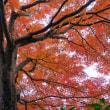 錦秋の輝き(Ⅷ)