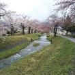 会津の桜はまだまた楽しめます(^o^)/~~